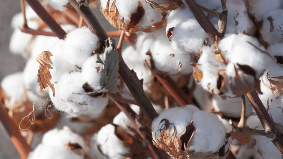 The Better Cotton Initiative